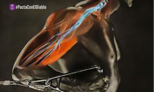 El entrenamiento neuromuscular